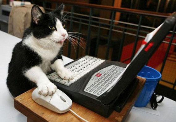 cat-votes-for-himself.jpg