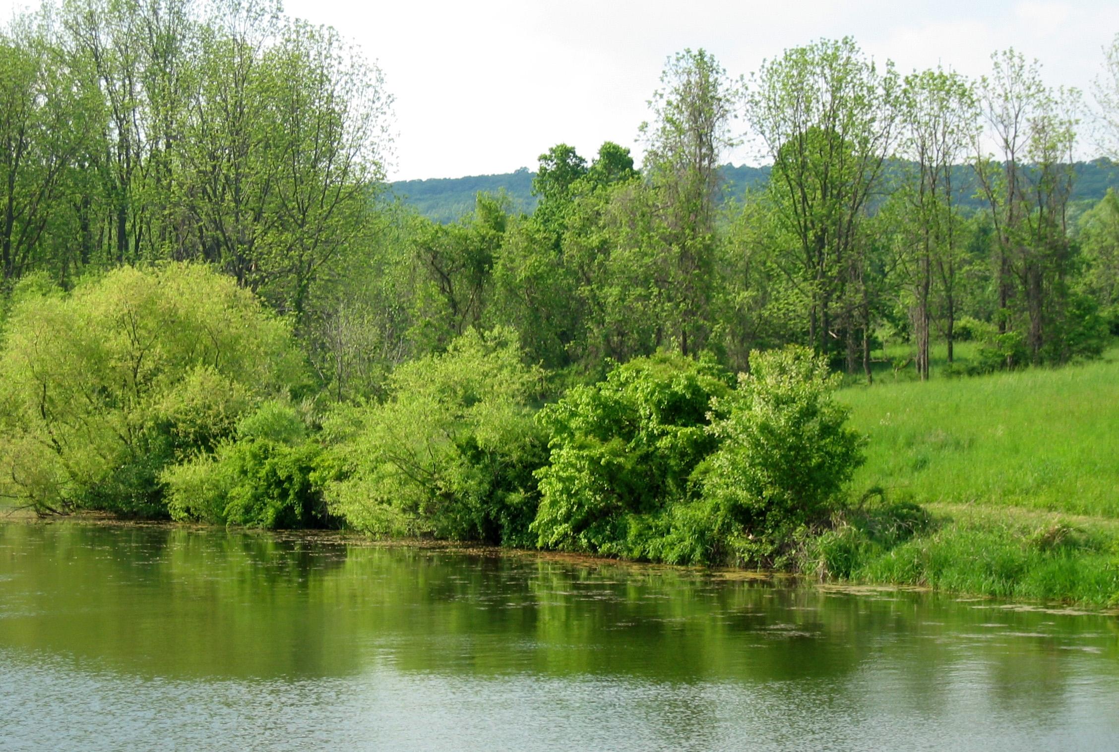 lorimer lake cropped.jpg