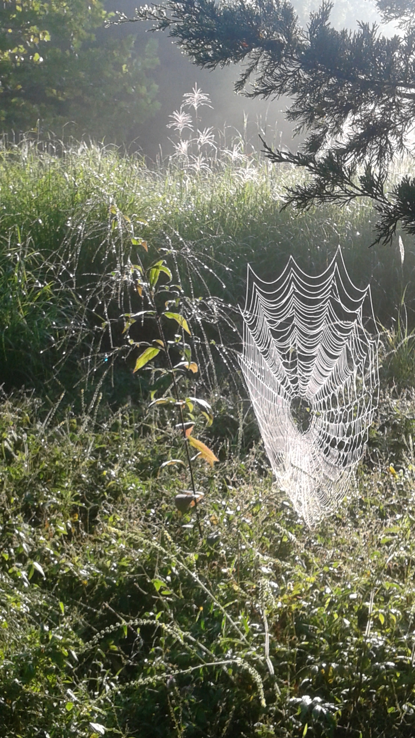 Spider Web CH.jpg