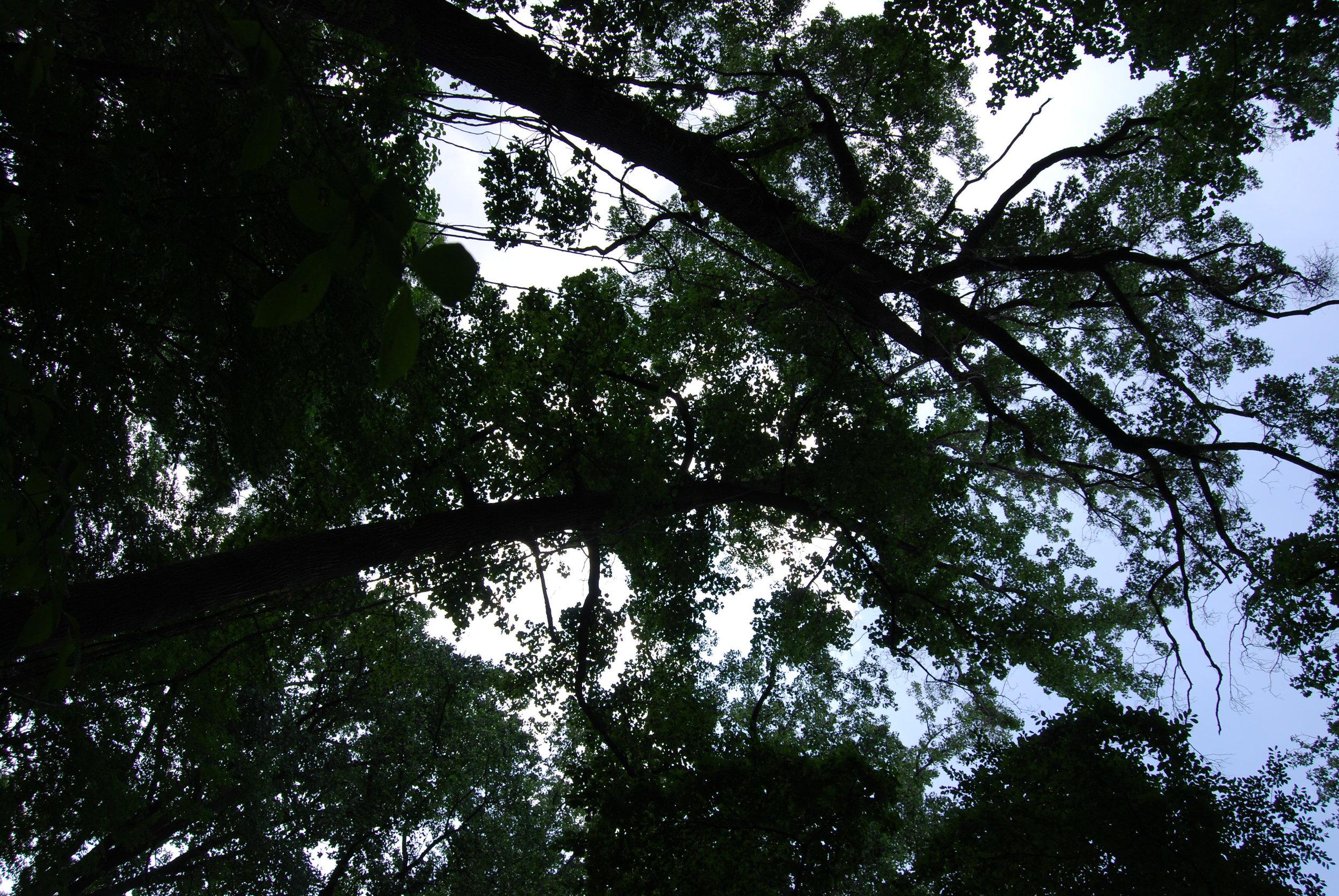 airdrie treesky.JPG