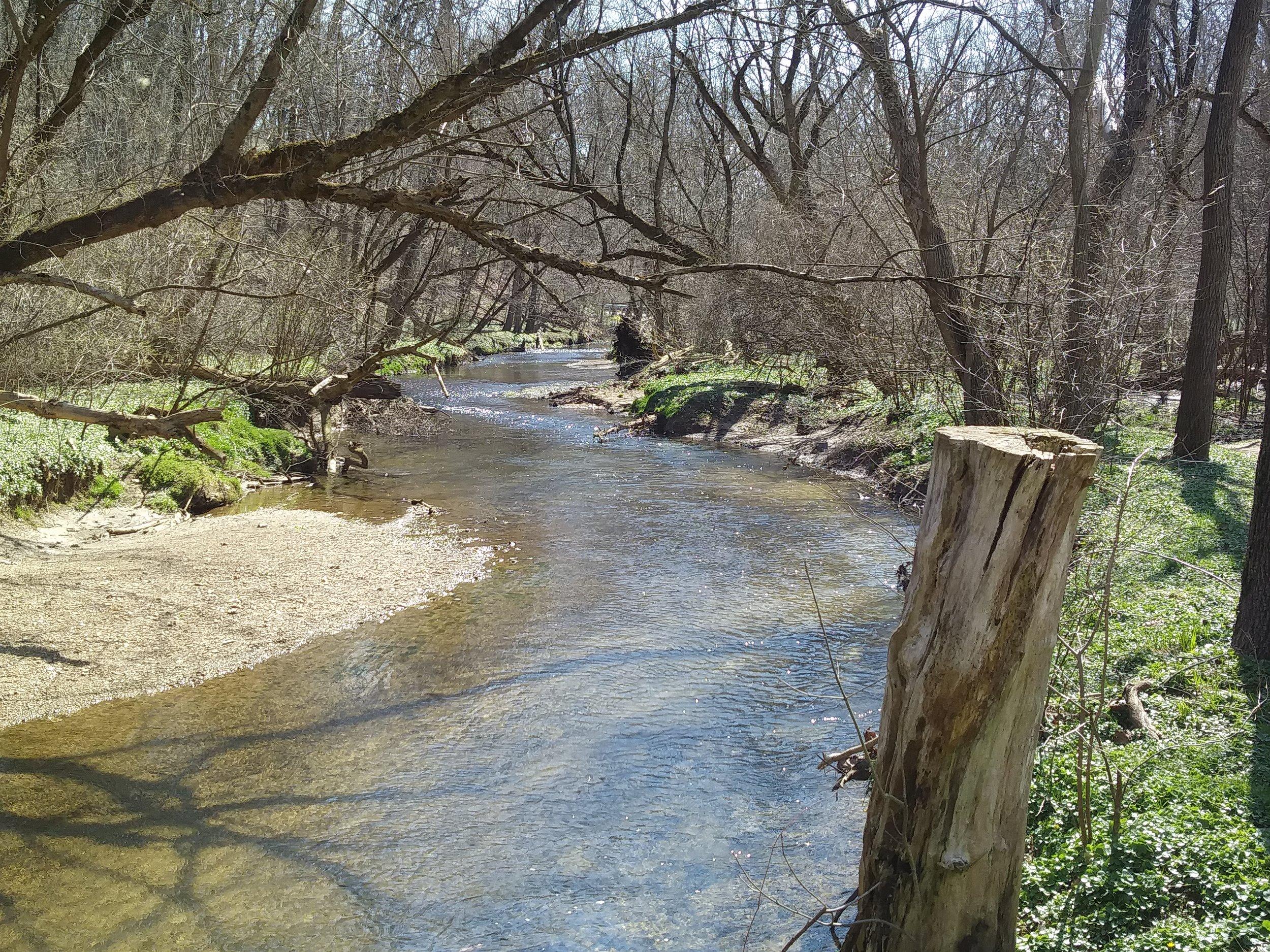 Valley Creek in Cedar Hollow Preserve.jpg