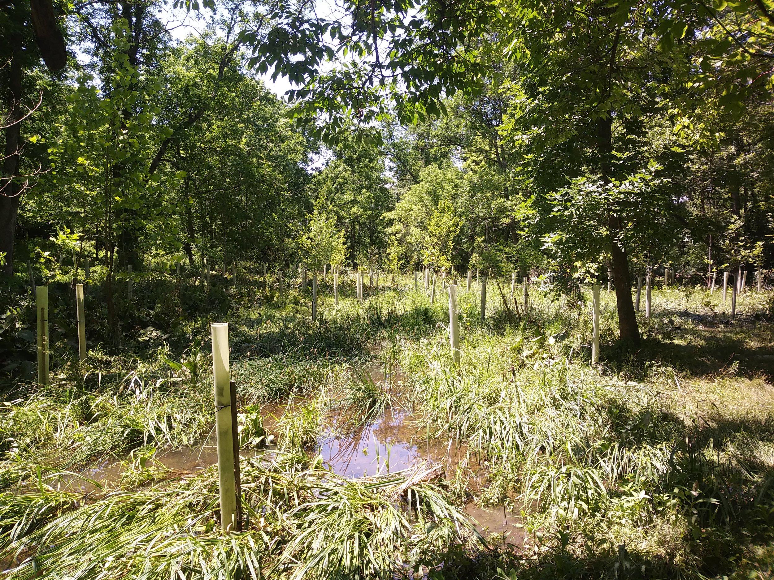 Valley Creek After Flood Repair.jpg