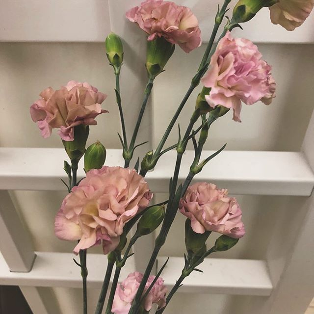 Mocha Sweet mini carnations, our fresh pick of the day.  #carnations #flowers #flower #floral #pink #vintage #seattle #wa #seattlewa #pnw #florist