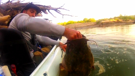 Denny hoists a big flathead from his daytime home