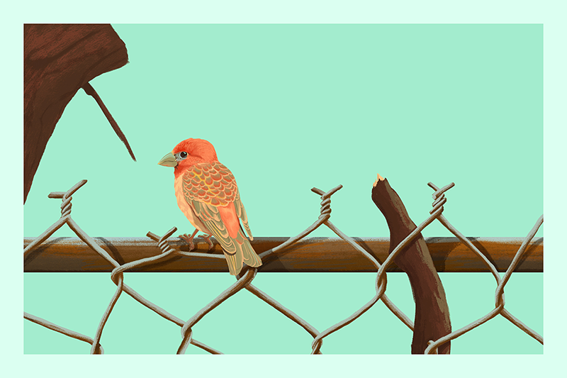 Rzadkowski-Birds-Fence-Personal-gallery.png