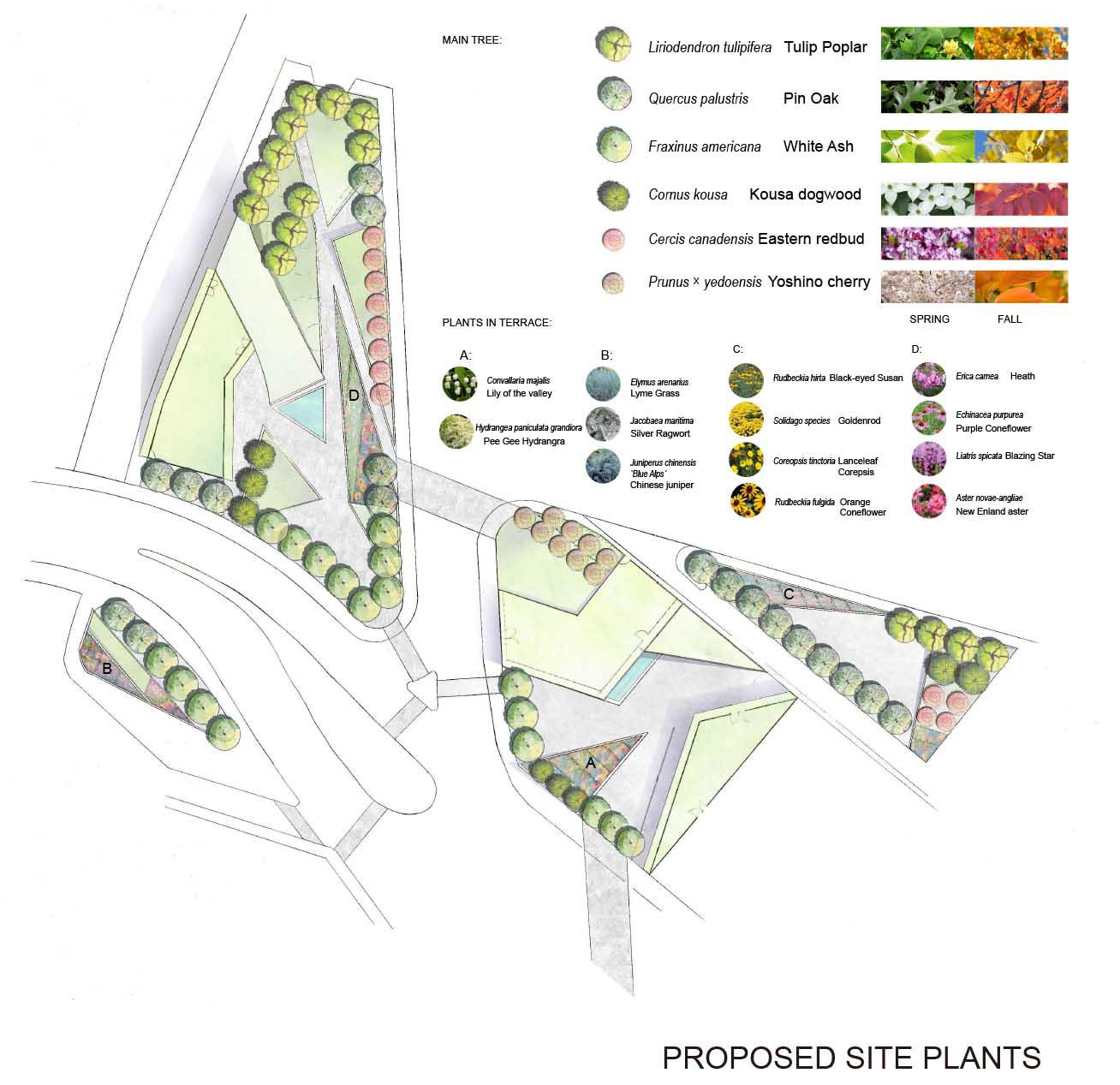 diagrams PLANTS33331.jpg