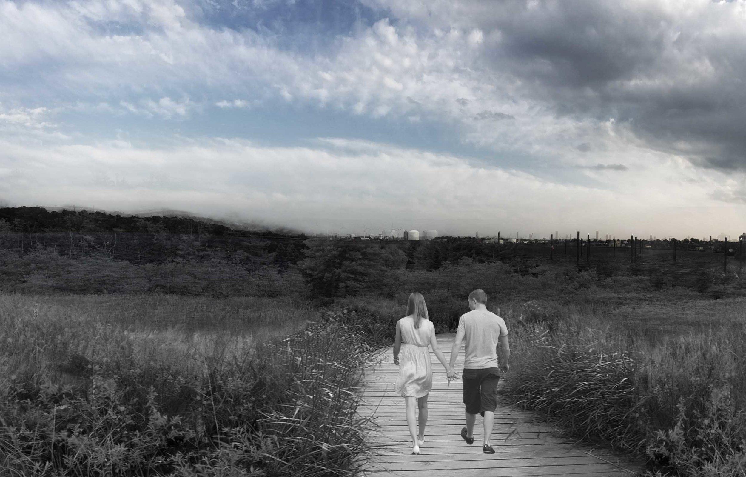 Wetland Path for Great Egret Observation.