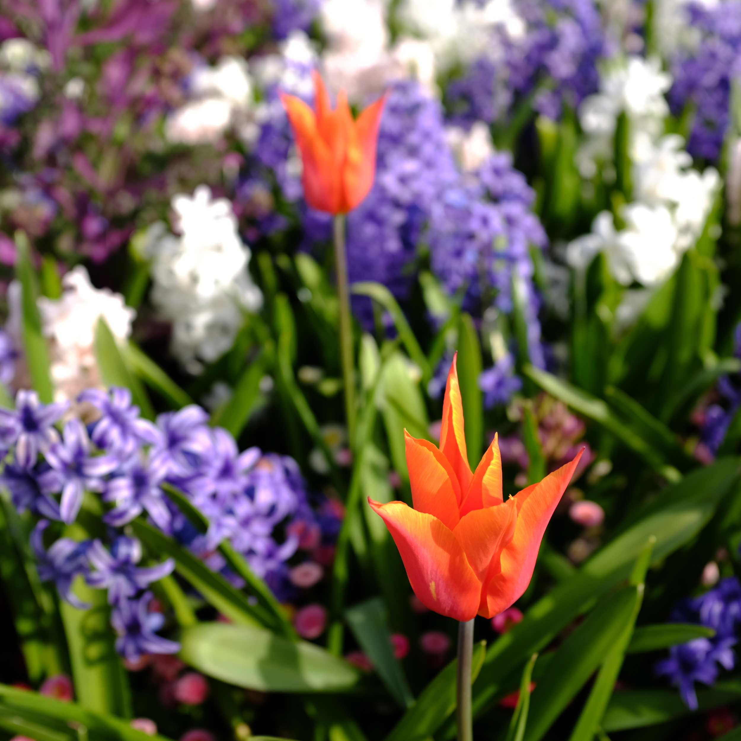 """'Early Spring on Quayside"""" - Spring Flowers Blooming Along the Quayside in New Westminster"""