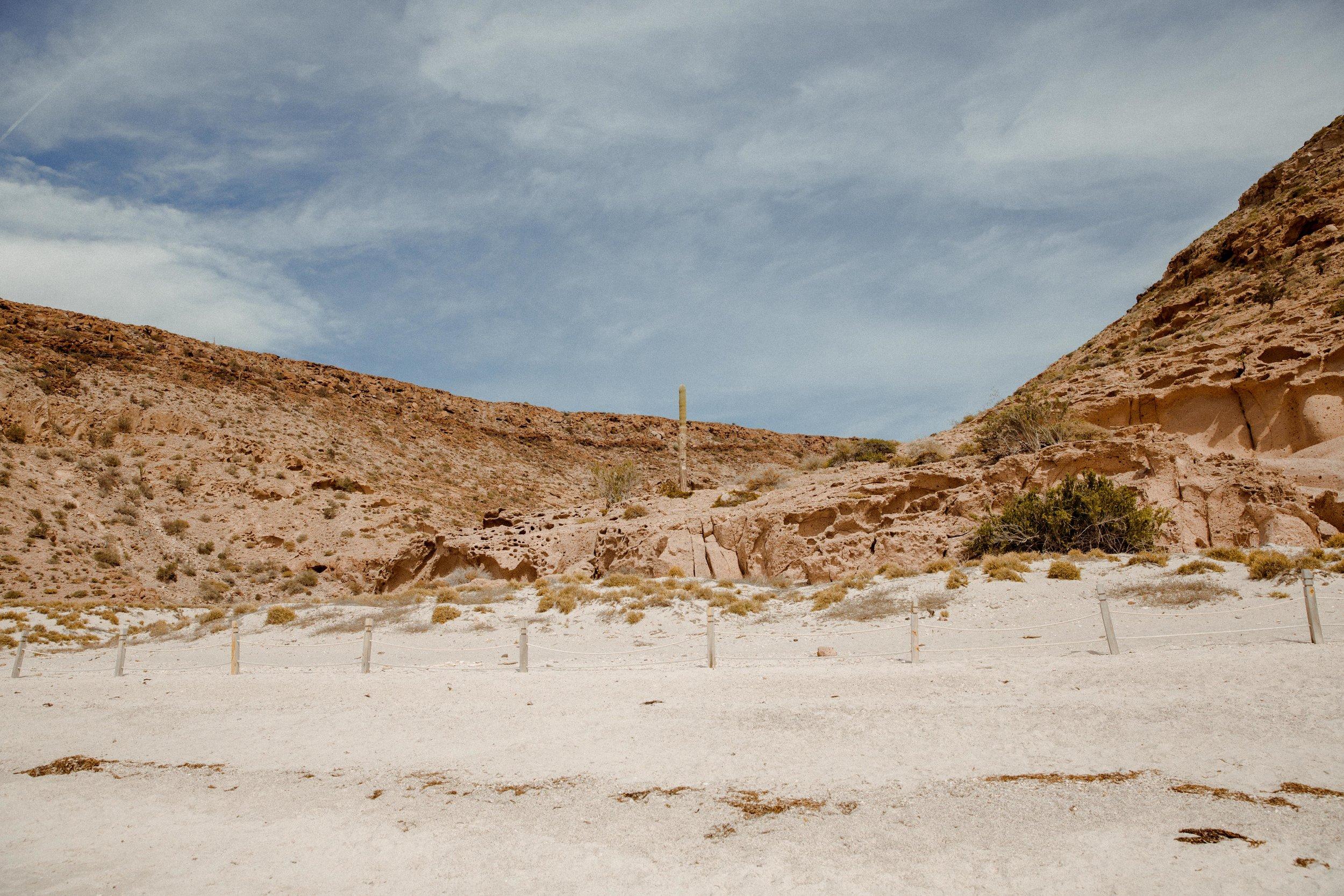 cacti-samlandreth-mexico