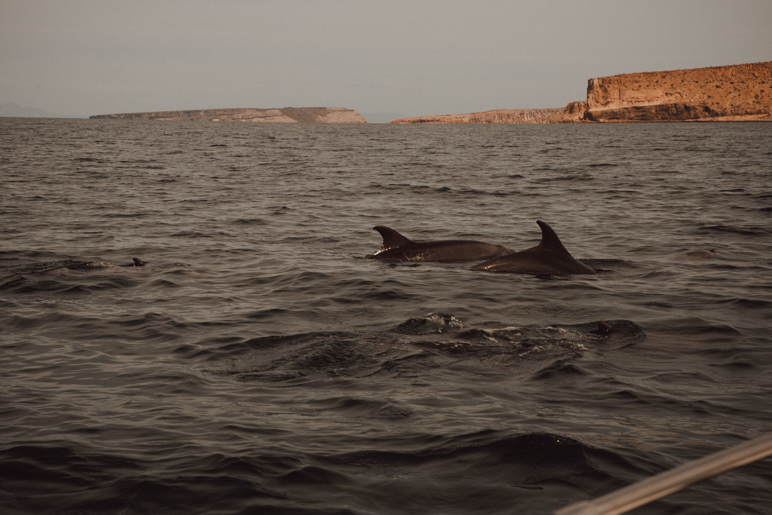 samlandreth-sea-life-mexico