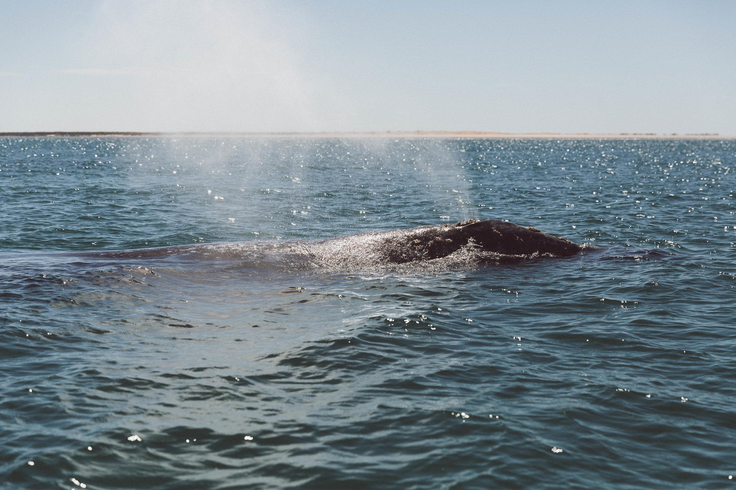 whale-ocean-samlandreth