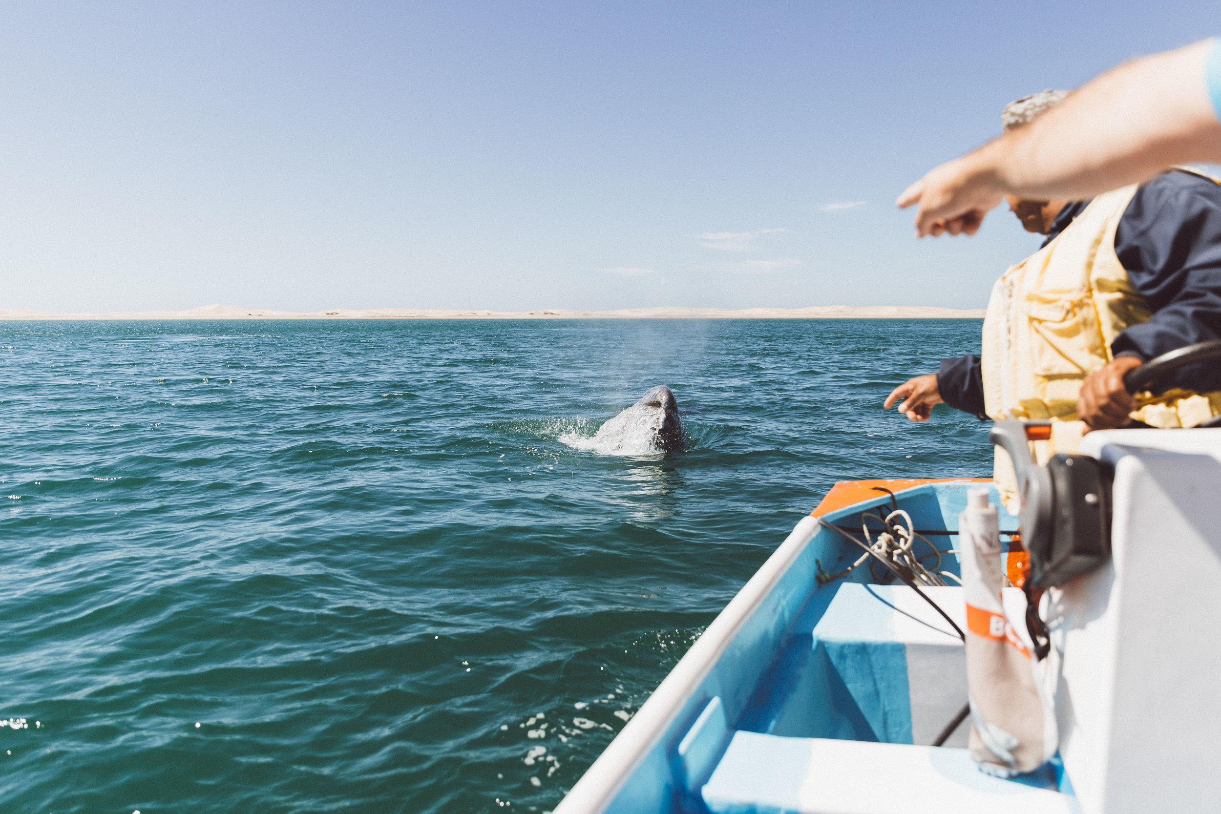 whale-wathcing-mexico-samlandreth