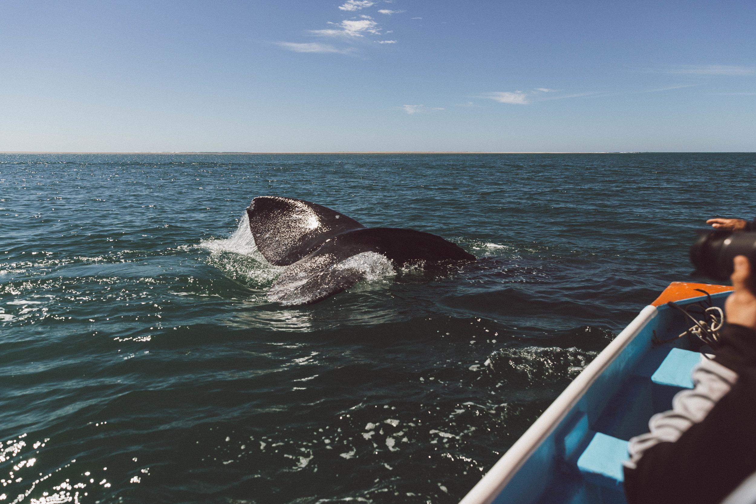 samlandreth-whalewatching