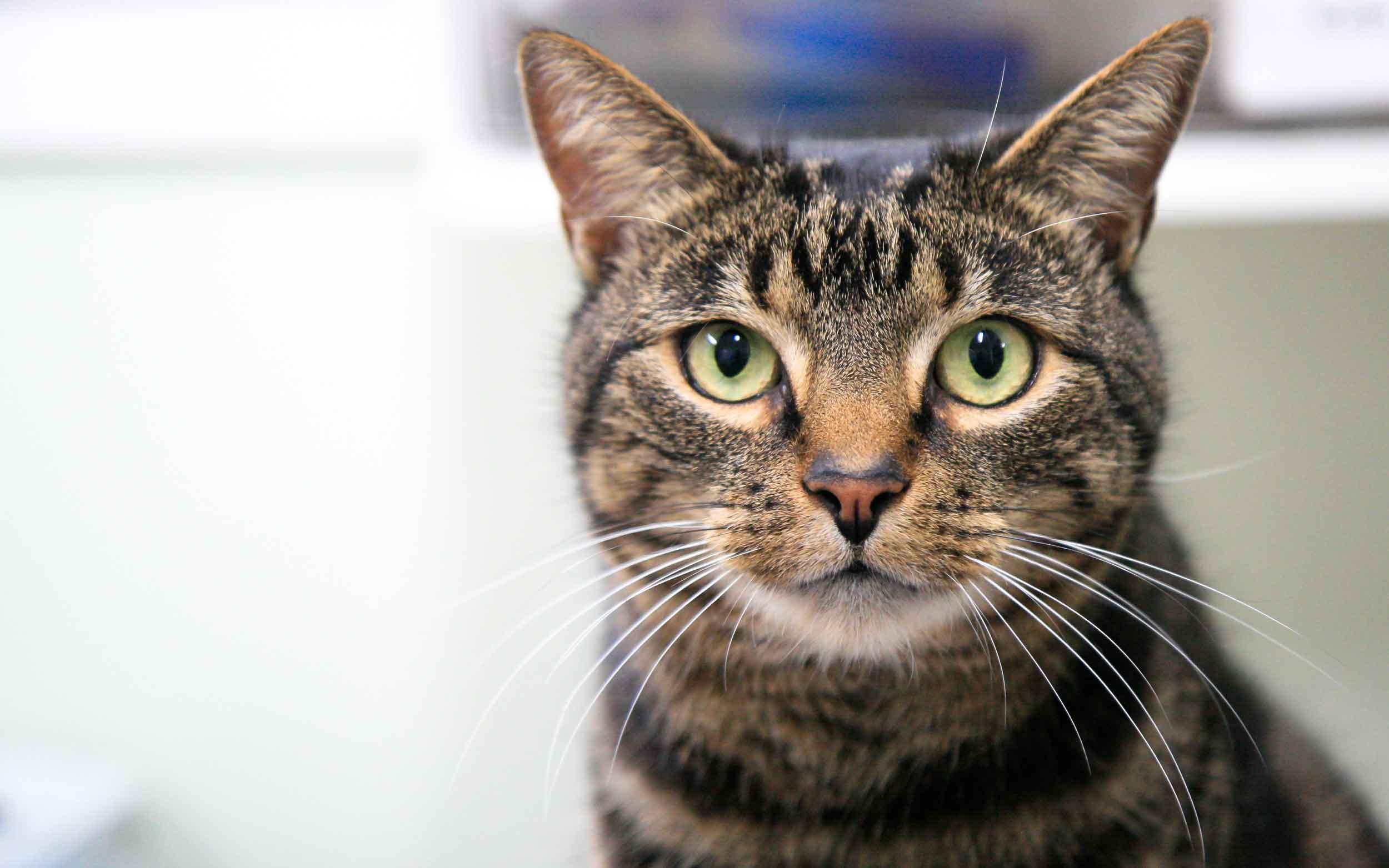 MEDICAL SERVICES    Preventative veterinary medicine & diagnostics for your animals    Learn more