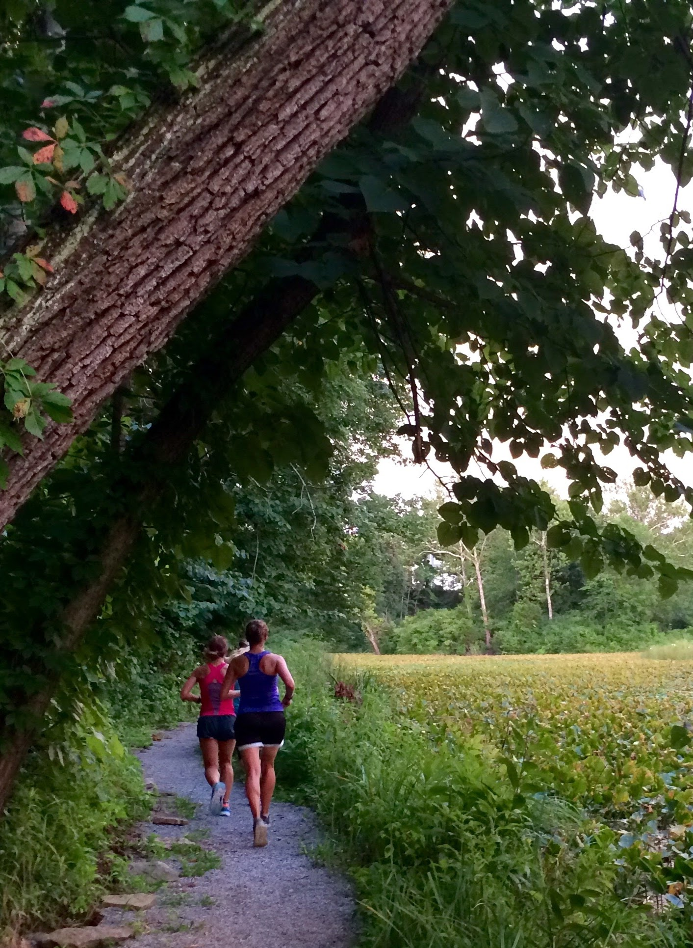runners injury trail running tips running coach shelly Minnesota