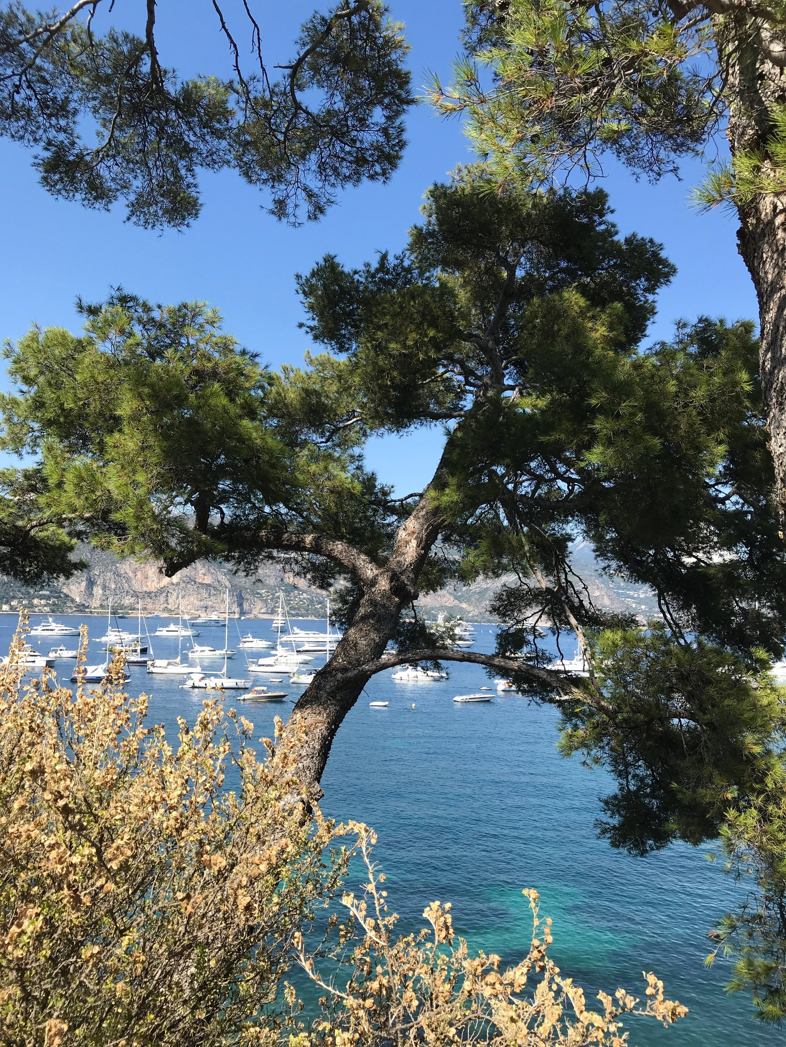 It is called the Cote D'Azur for a reason ... perhaps one of the first memories I have of visiting is the blue seas, blue skies and the general lushness of the countryside.