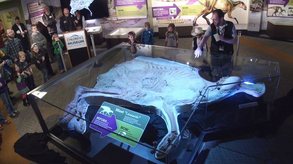 The actual Leonardo dinosaur fossil on display at The Children's Museum of Indianapolis.