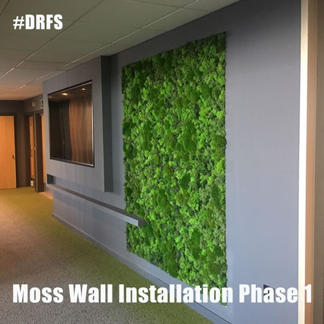 Flowers and botanics are my world, but so are power tools, hardware and installations.⠀⠀⠀⠀⠀⠀⠀⠀⠀ Here is Phase 1 of the moss wall project. Company branding to be overlaid the following day⠀⠀⠀⠀⠀⠀⠀⠀⠀ Floral Exploration courses will take a peek at these concepts and how we can use them more in everyday floral art and design.⠀⠀⠀⠀⠀⠀⠀⠀⠀ #daretobedifferent #floralcreative #florist #flowers #floral #floristry #flowerschool #floristrystudent #learnfloristry #bethebest #liveandlearn #floweracademy #floristrytutor #teachflowers #floralart #floralinstallations #mosswalls #mosswallinstallation #flowerlovers #becreative #trustyourself #learnsomethingnew #careerchange #artforall #bournemouthcreatives #creativemedium #naturalart #botanical #floriculture