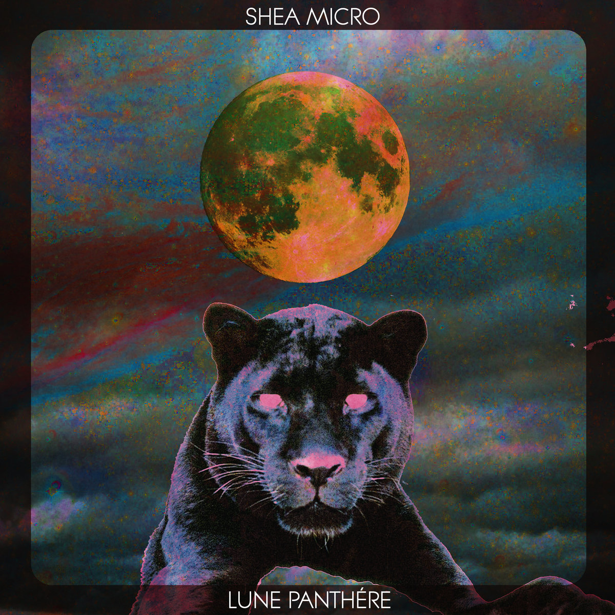 Shea Micro - Lune Panthére