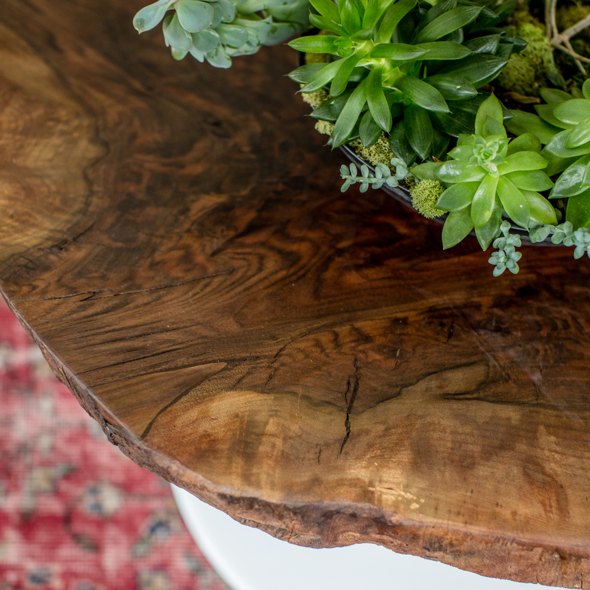 Walnut Burl With High Gloss White Tulip Base
