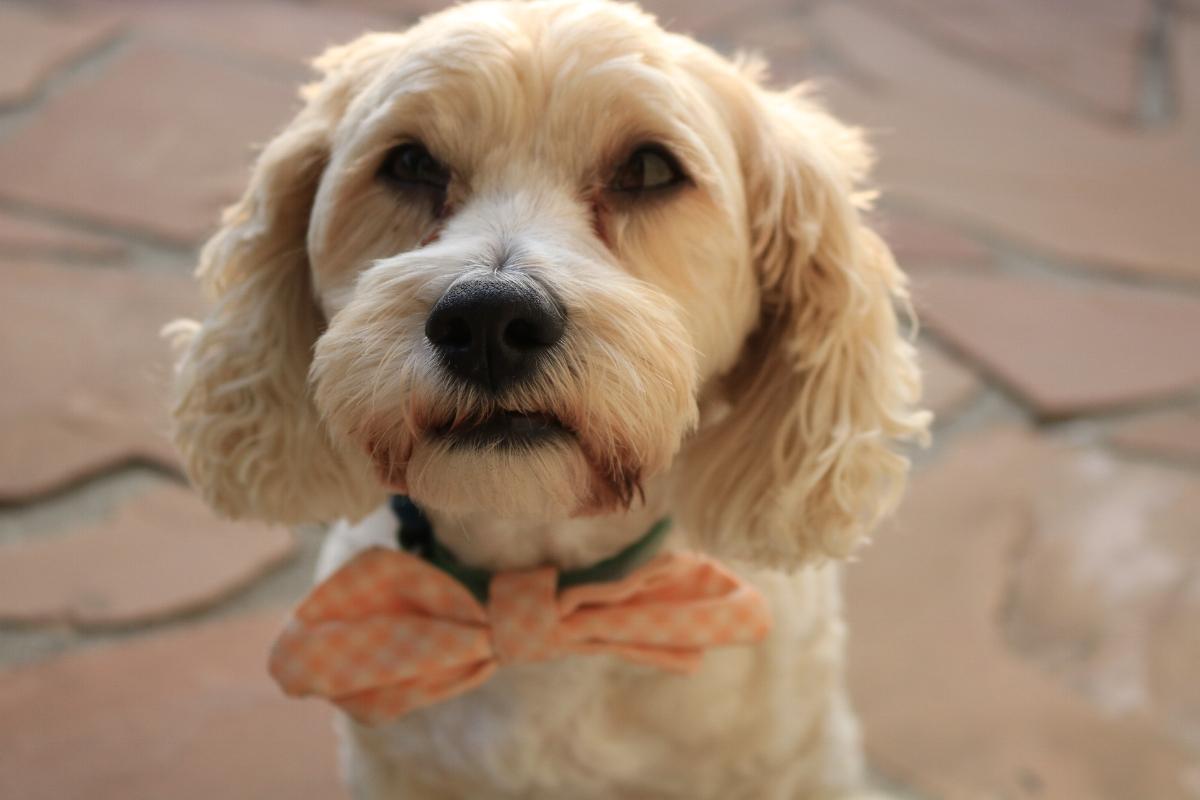Dear Doggy • LA designed & Handcrafted pet apparel   www.deardoggyla.com