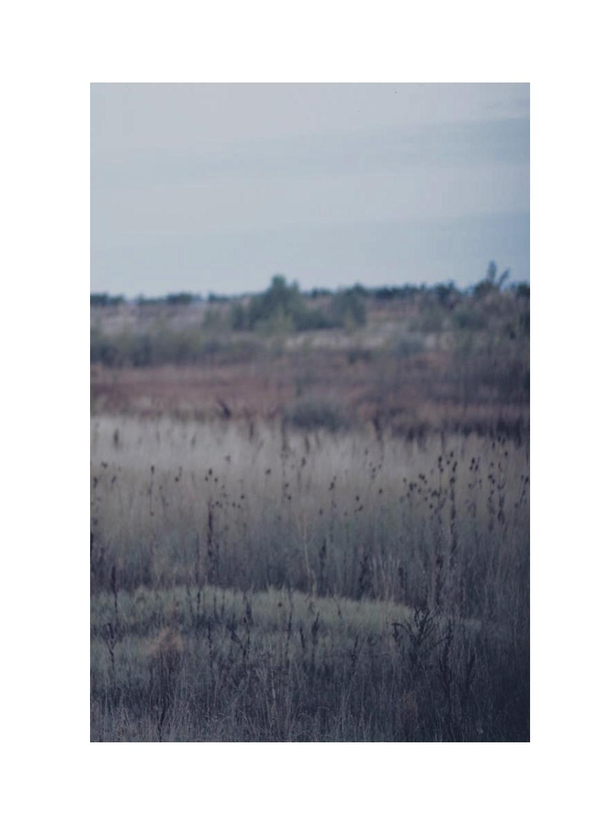 IMG_2155.jpg