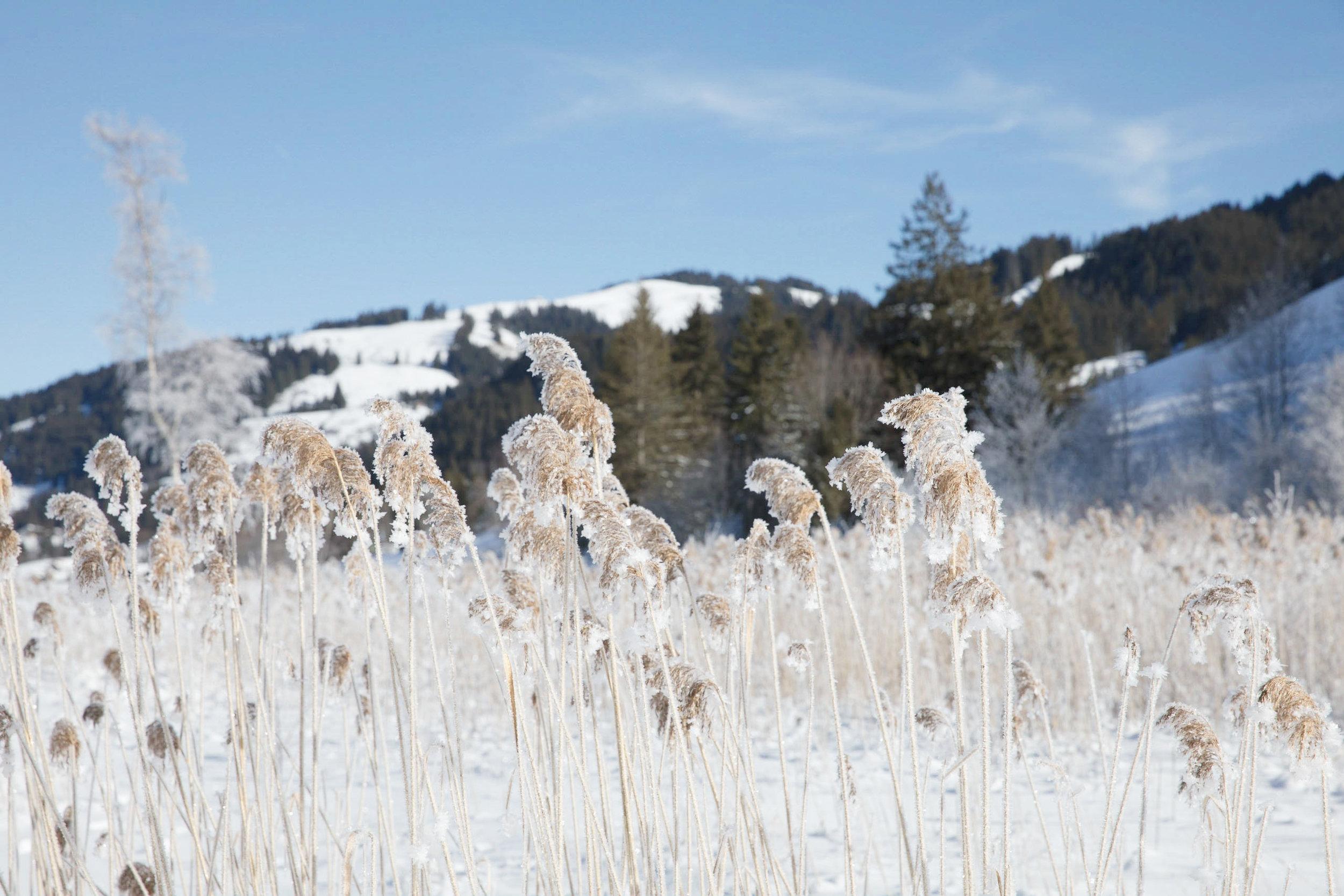 schwarzsee-frozen-lake-winter-something-swiss-switzerland.jpg