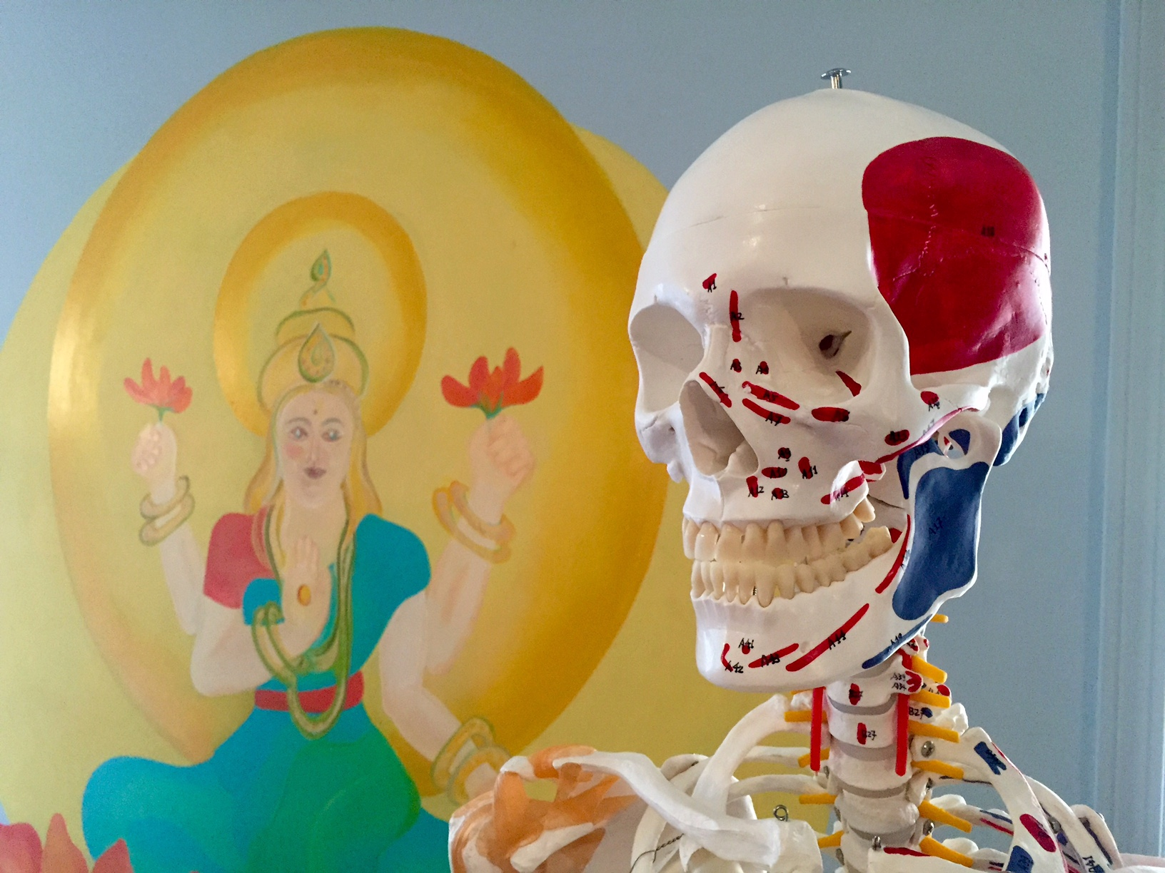 """Mr. Bones"" at Coolidge Corner Yoga, NSYA Fall 2015-2016 Training"