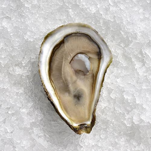 Oysters Ram Island.jpg
