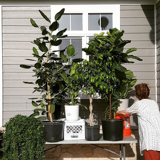 @kellymckaig.stylist.maker Making a summer forest on location in early spring = indoor plants pretending to be outdoor plants. #proplife #fakeit #makeyourownsummer