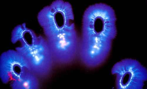 kirlian-fingerprints.jpg