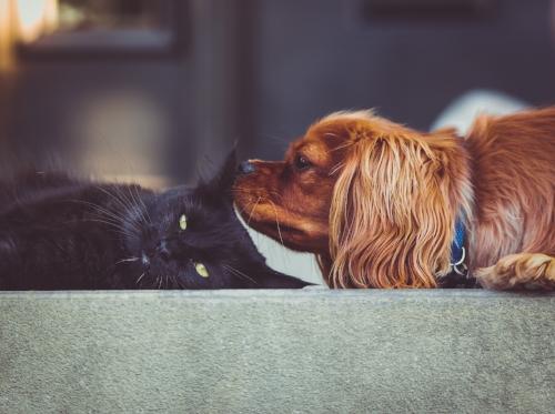 Red dog black cat.jpg