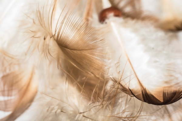 angel feathers.jpg