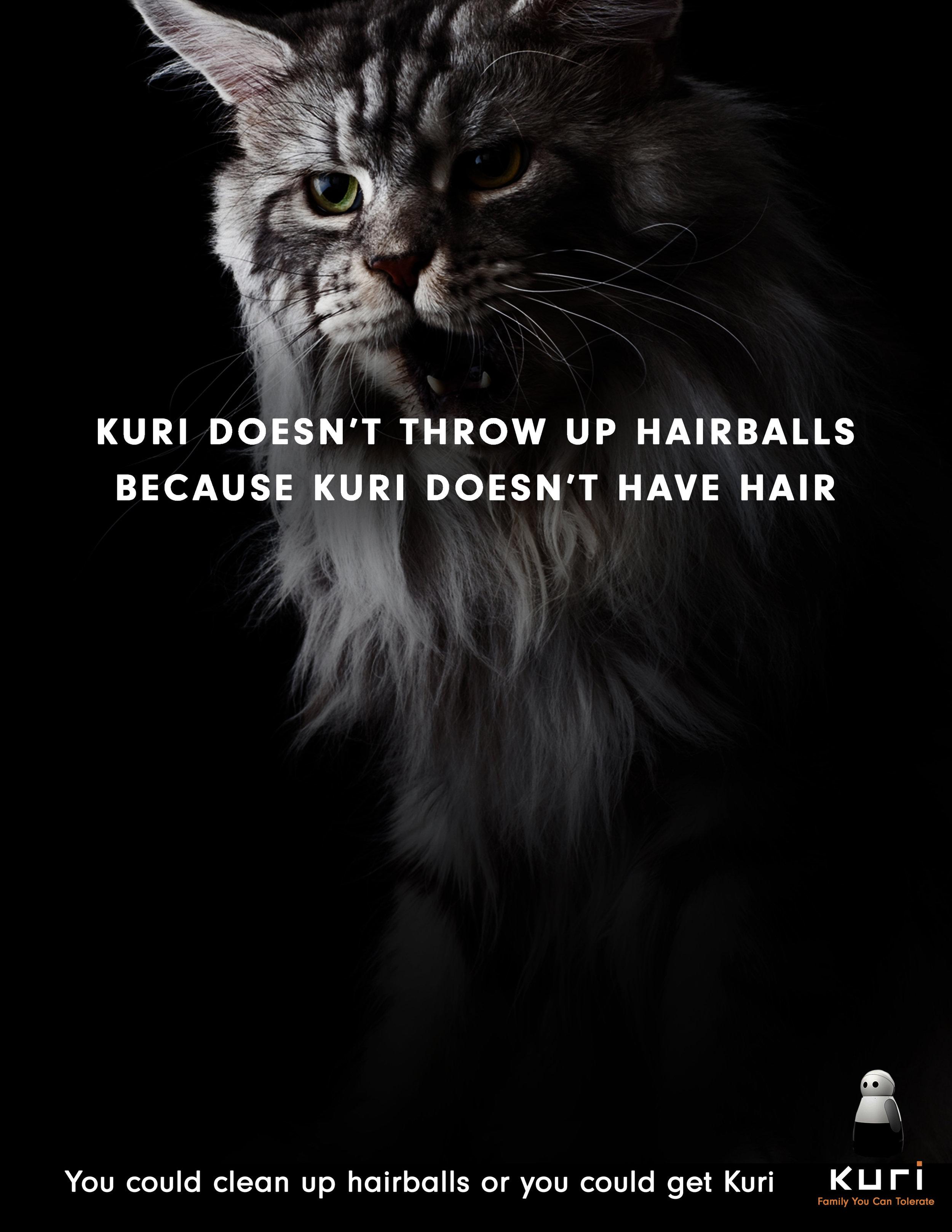 Cat - Kuri.jpg