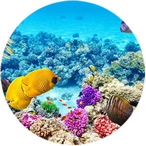 Great Barrier Reef Cruise, Snorkel or Dive Tours