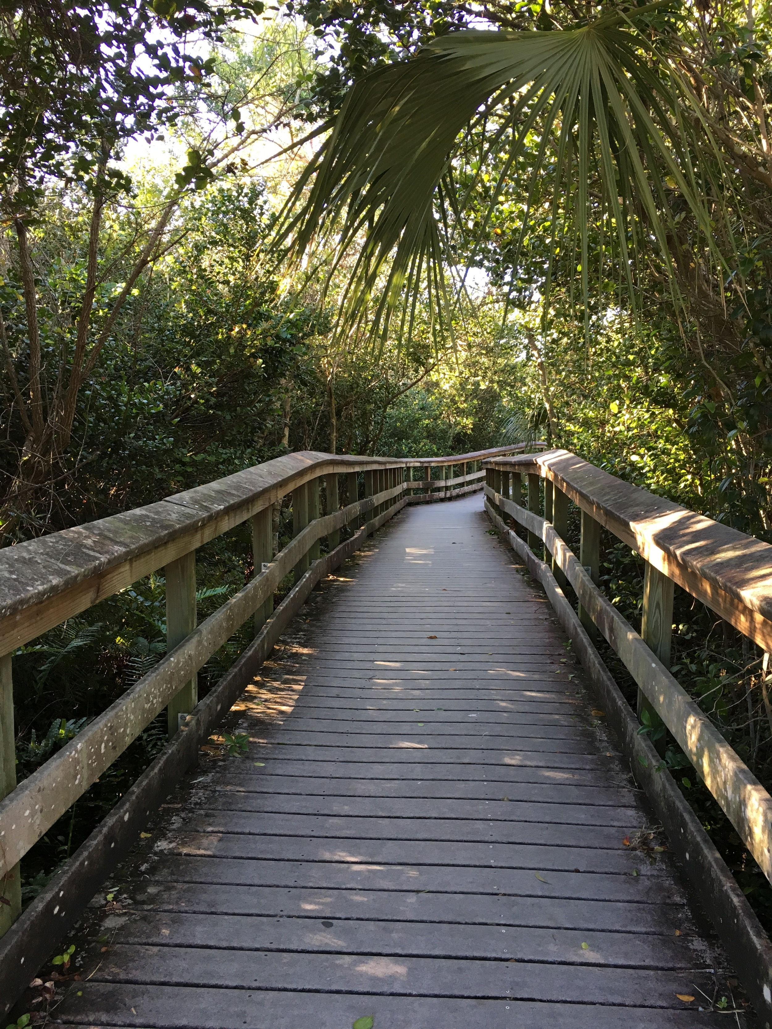 Along the trail, Everglades National Park. Photo by Derek Wright.