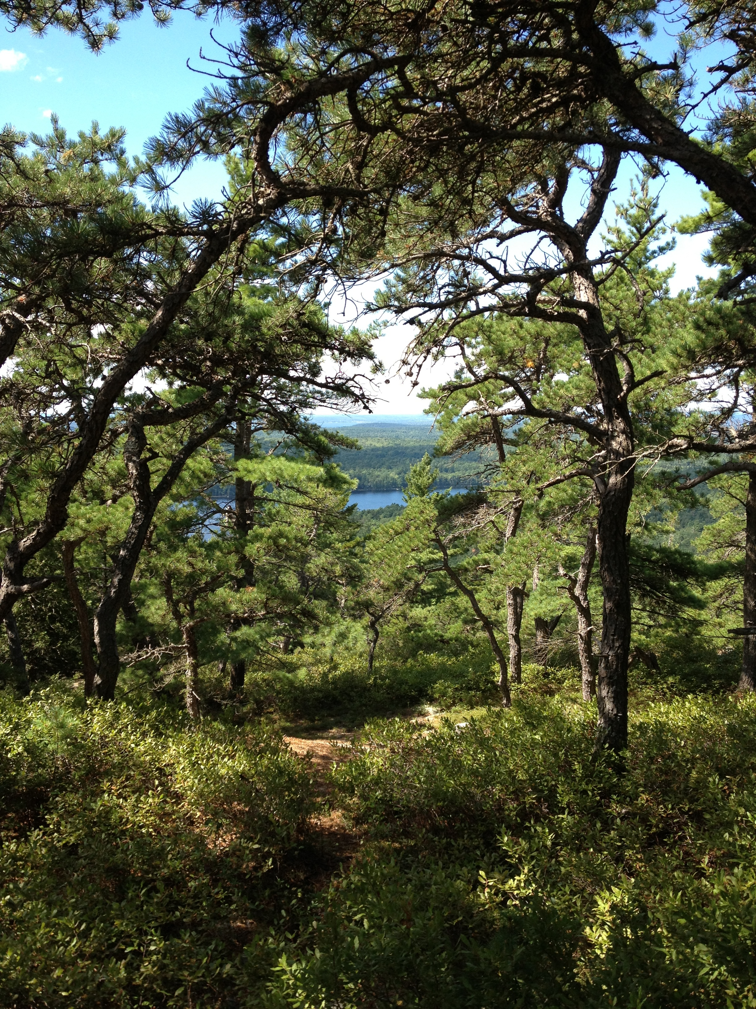View from Acadia Mountain trail, photo by Derek Wright.