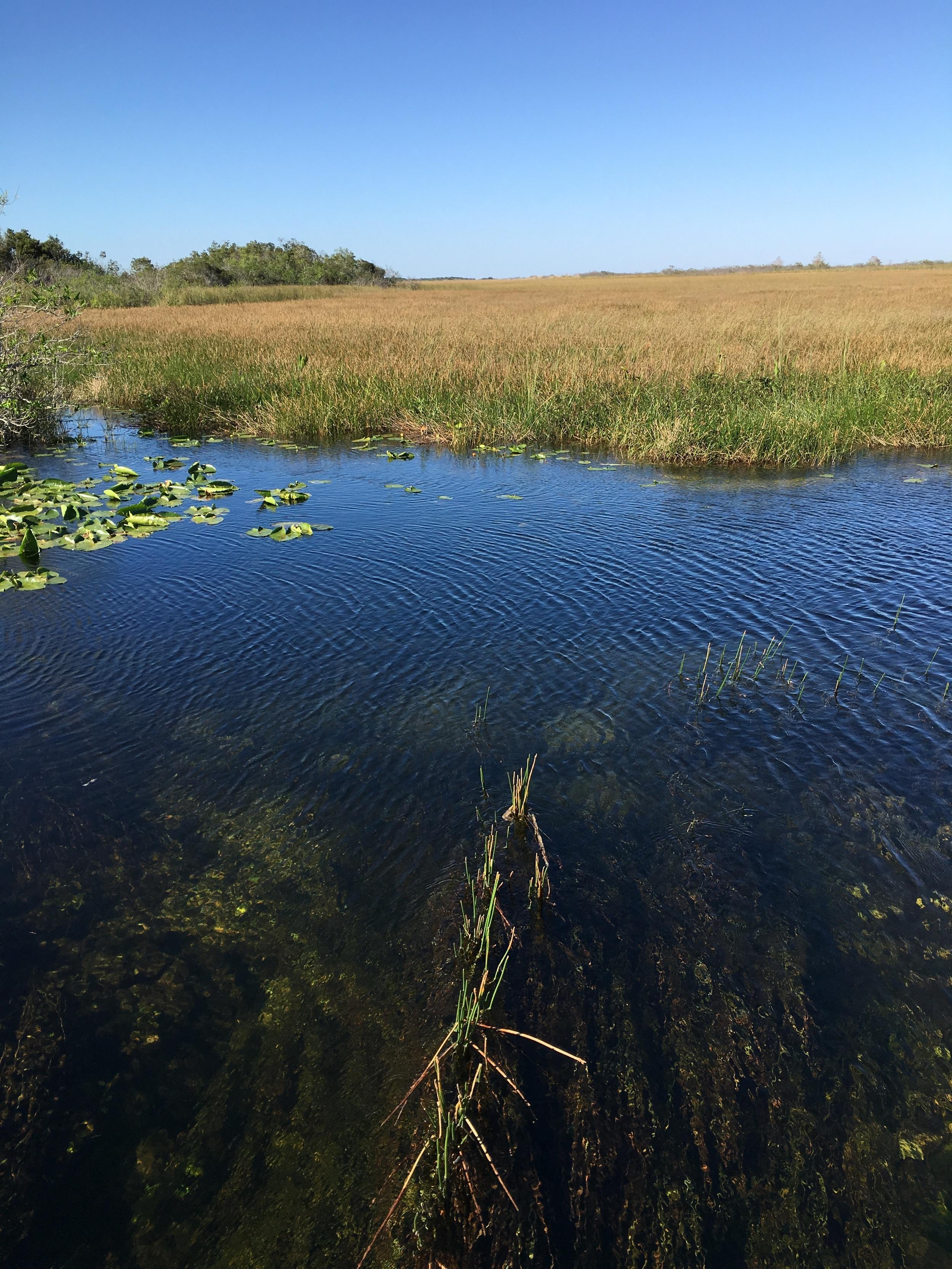 Sawgrass prairie, photo by Derek Wright.