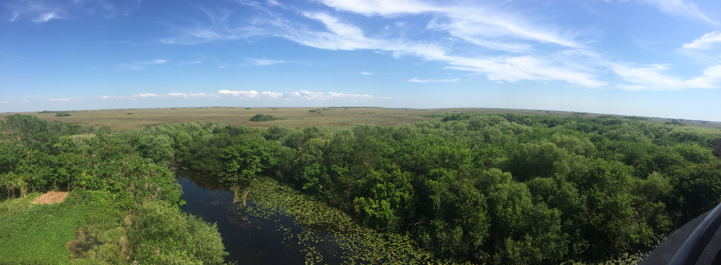 Everglades wetlands from Shark Valley Observation deck, photo by Amy Beth Wright.