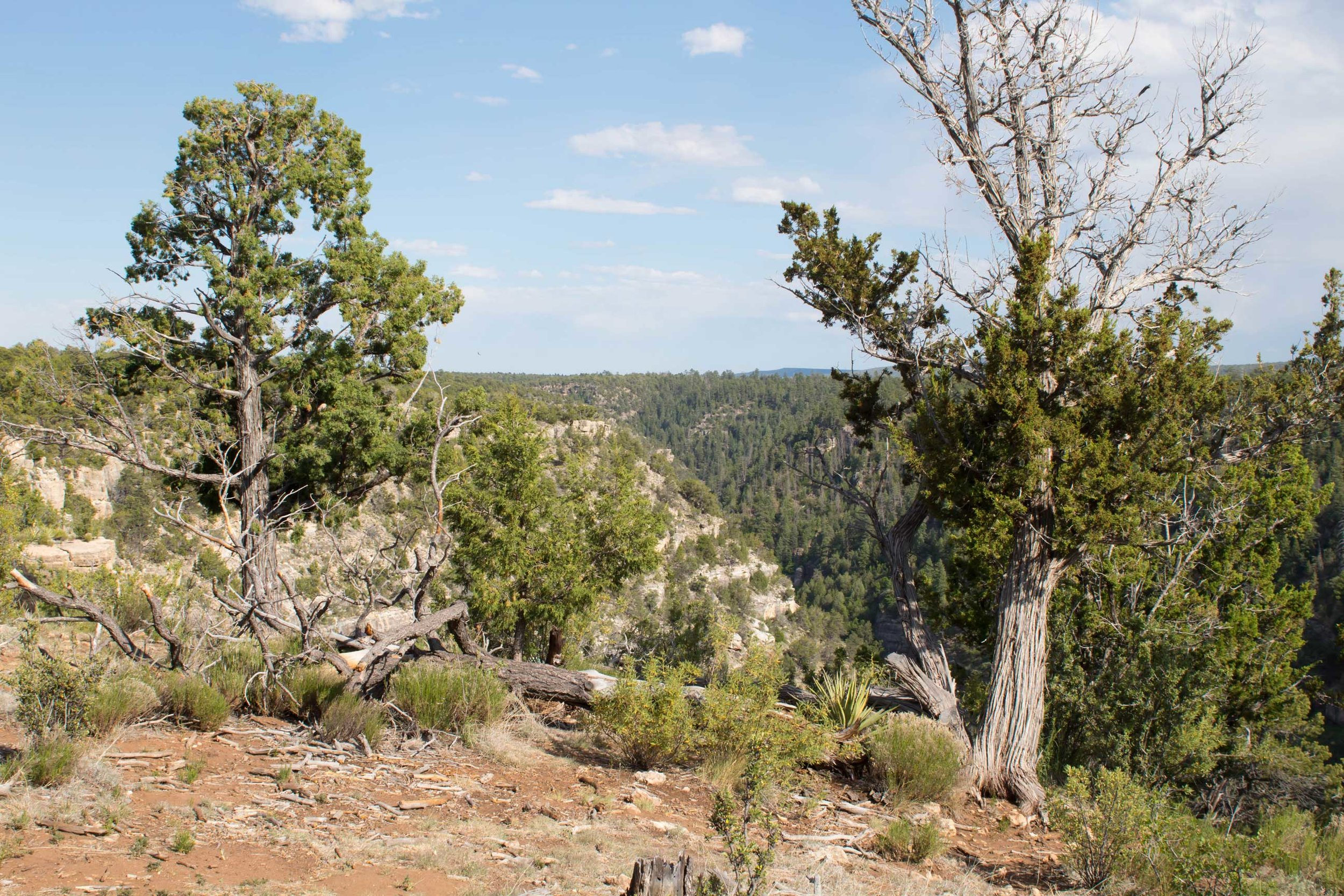 Walnut Canyon National Monument, photo by Amy Beth Wright.