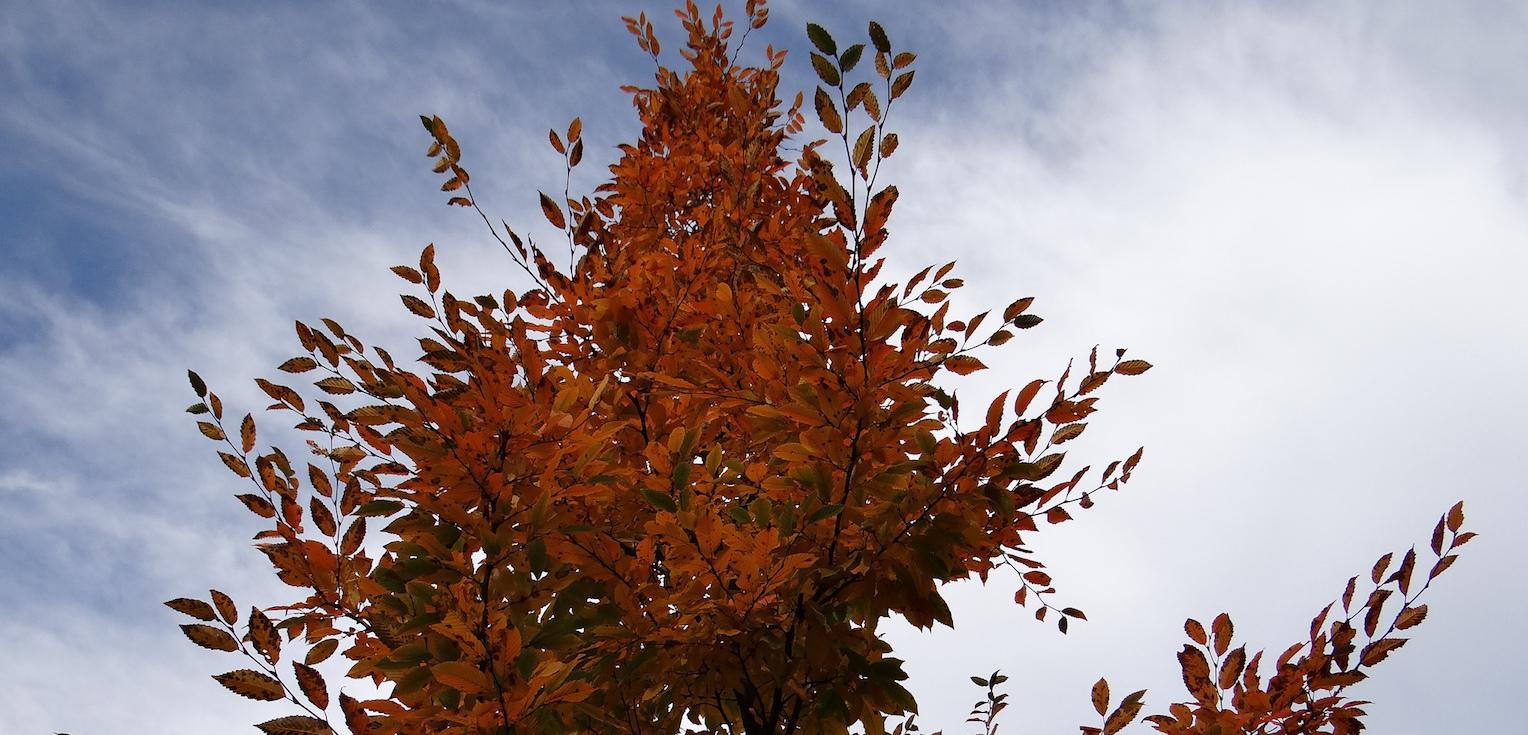 Tree Crop.jpeg