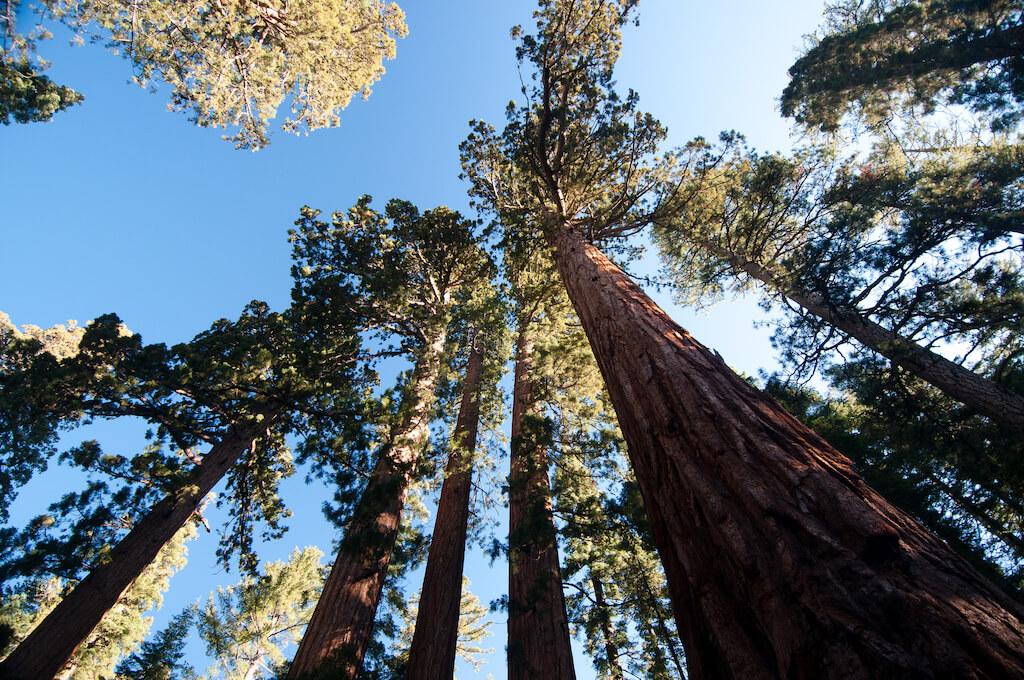 Yosemite Sara Eddy.jpg