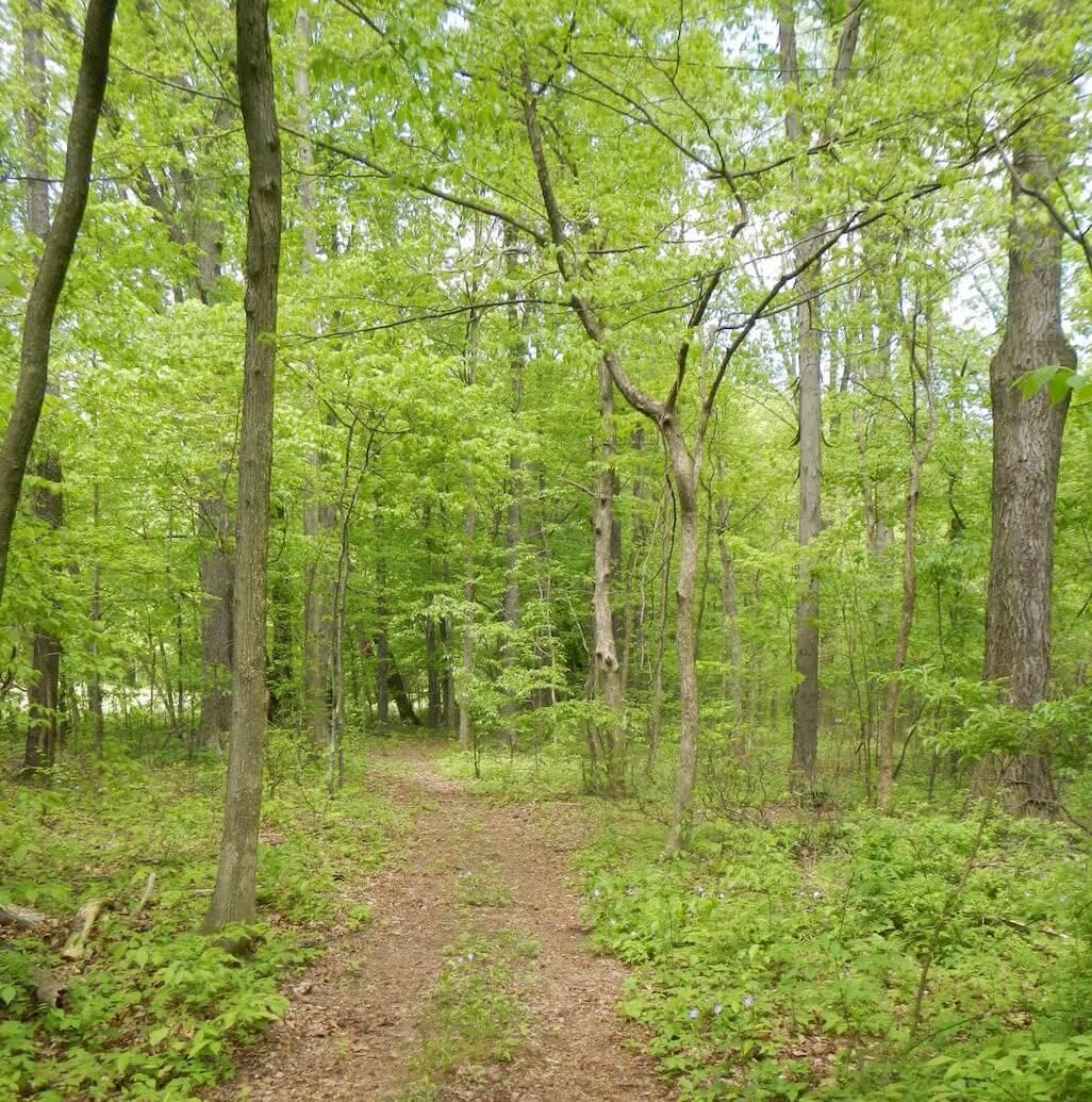 Ohio woods, photo courtesy Lauren Smith.
