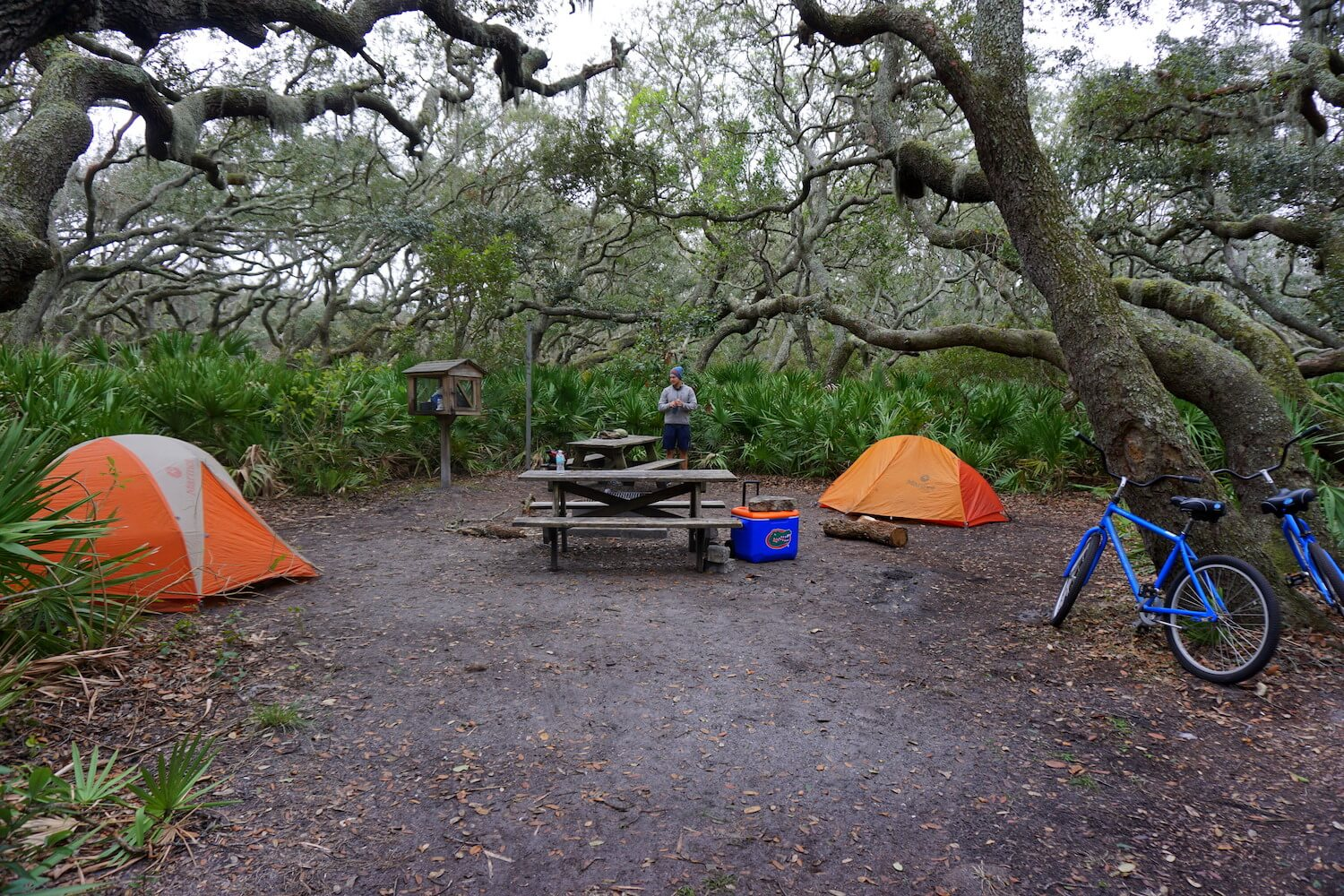 Campsite at Cumberland Island's Sea Camp, photo courtesy Lucy Bryan.