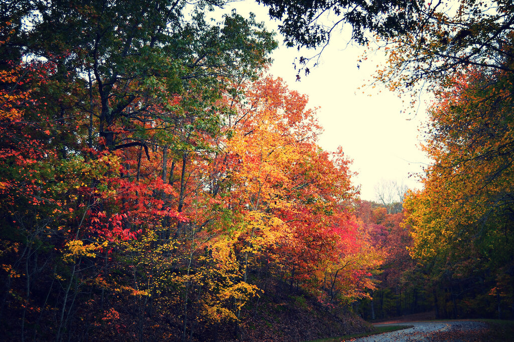 Kentucky in the fall, photo by  grace-and-peace  /  CC BY 2.0