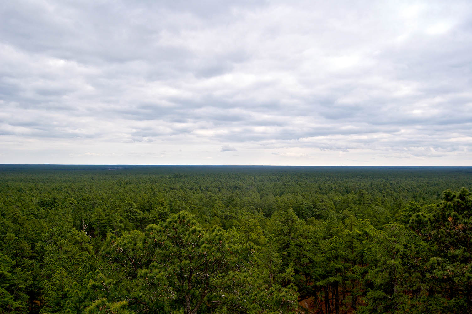 In the Pine Barrens.jpg