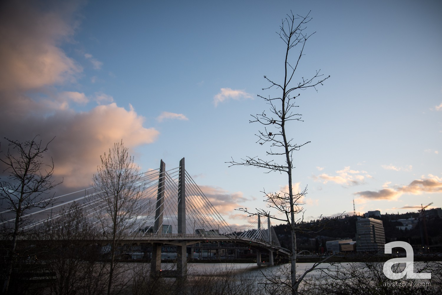 Portland-Tilikum-Bridge-Proposal-Engagement-Photography_0019.jpg