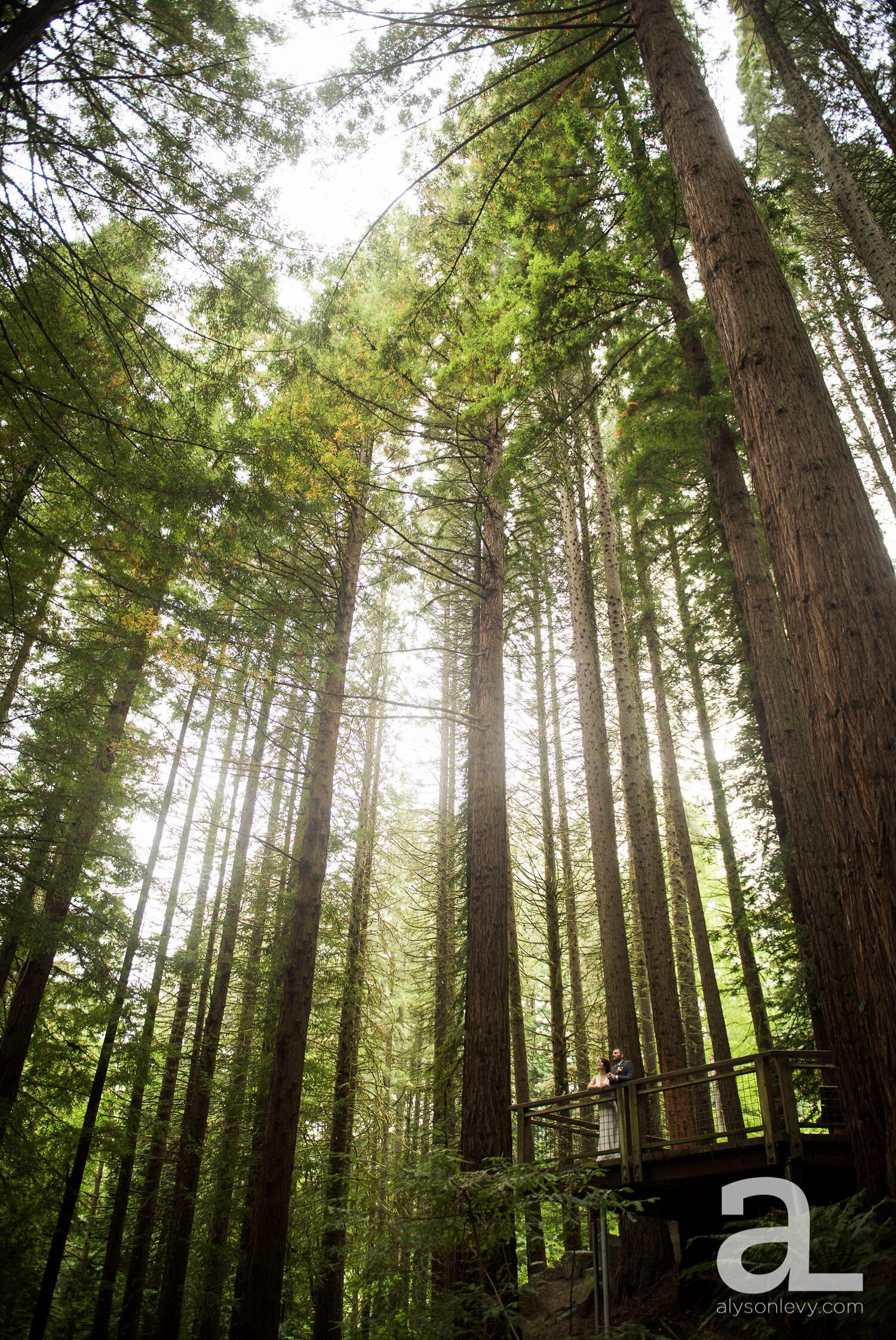Portland-Hoyt-Arboretum-Backyard-Wedding-Photography_0099.jpg