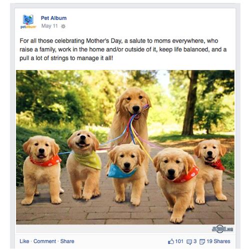 Pet Album on Facebook