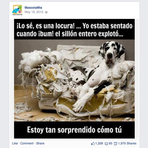MascotaMia on Facebook